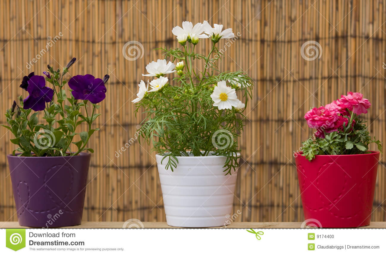 Beautiful flower pots stock photo image of vase purple 9174400 - Potted gardentricks beautiful flowers ...