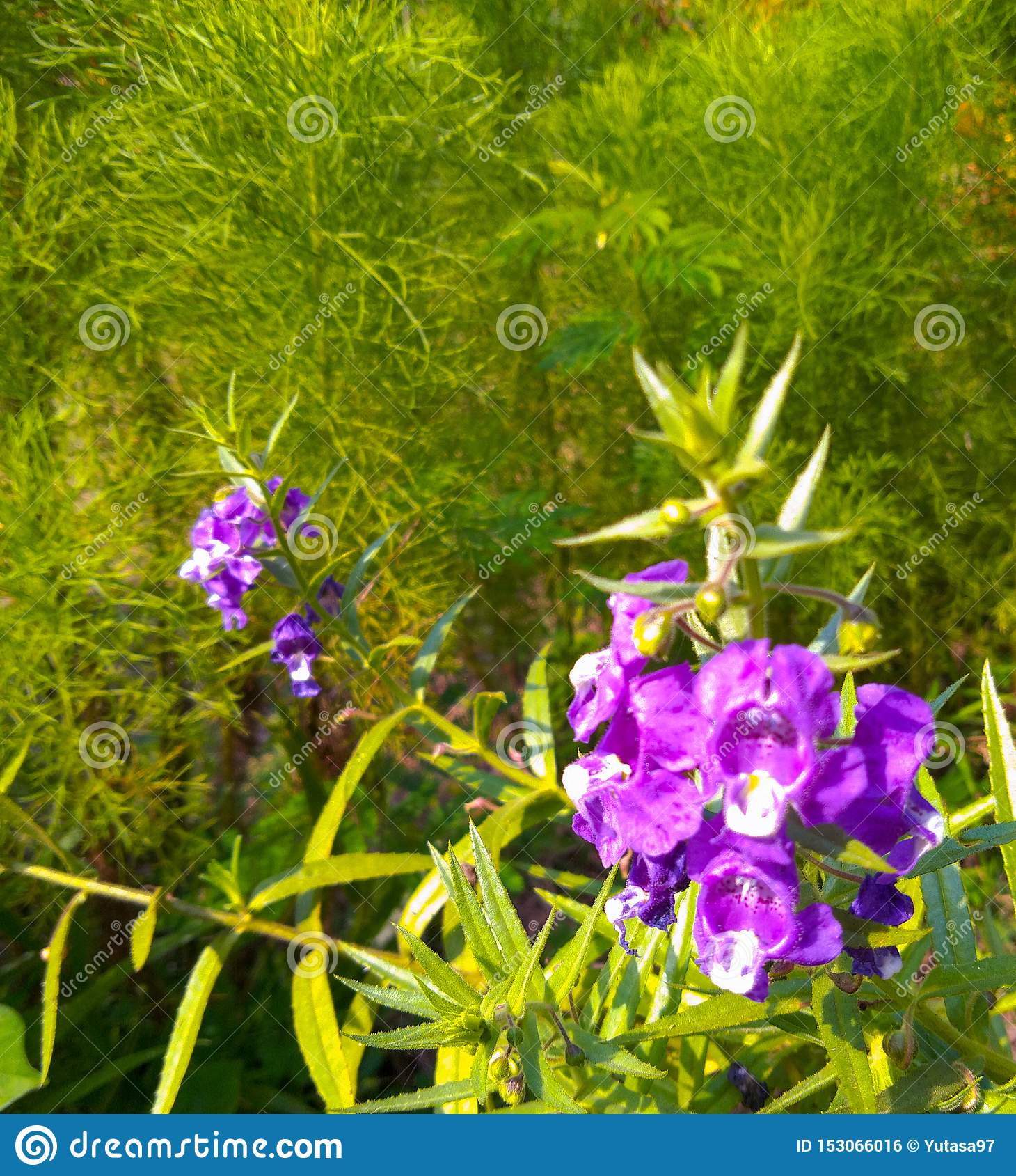 Beautiful flower with purple petals and a little spread white color in the middle