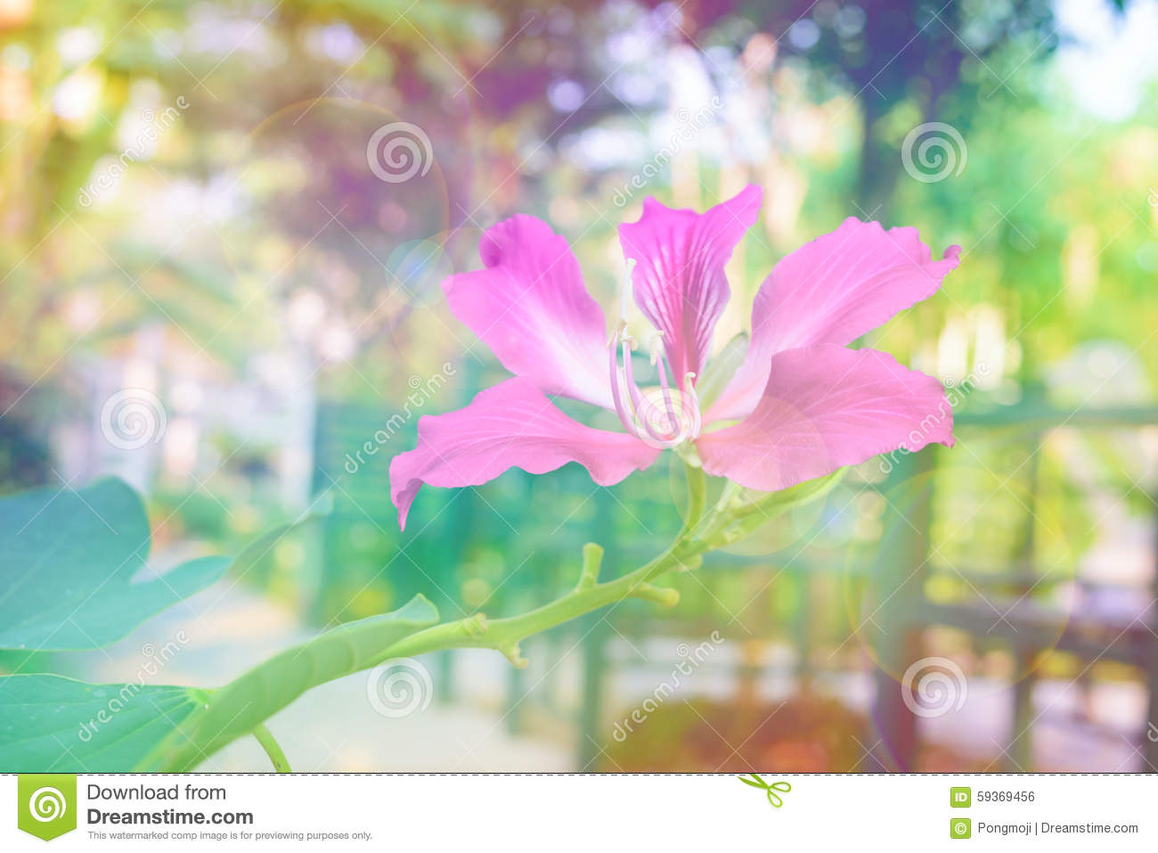 Beautiful, bright flowers: bathing - description of the plant 21
