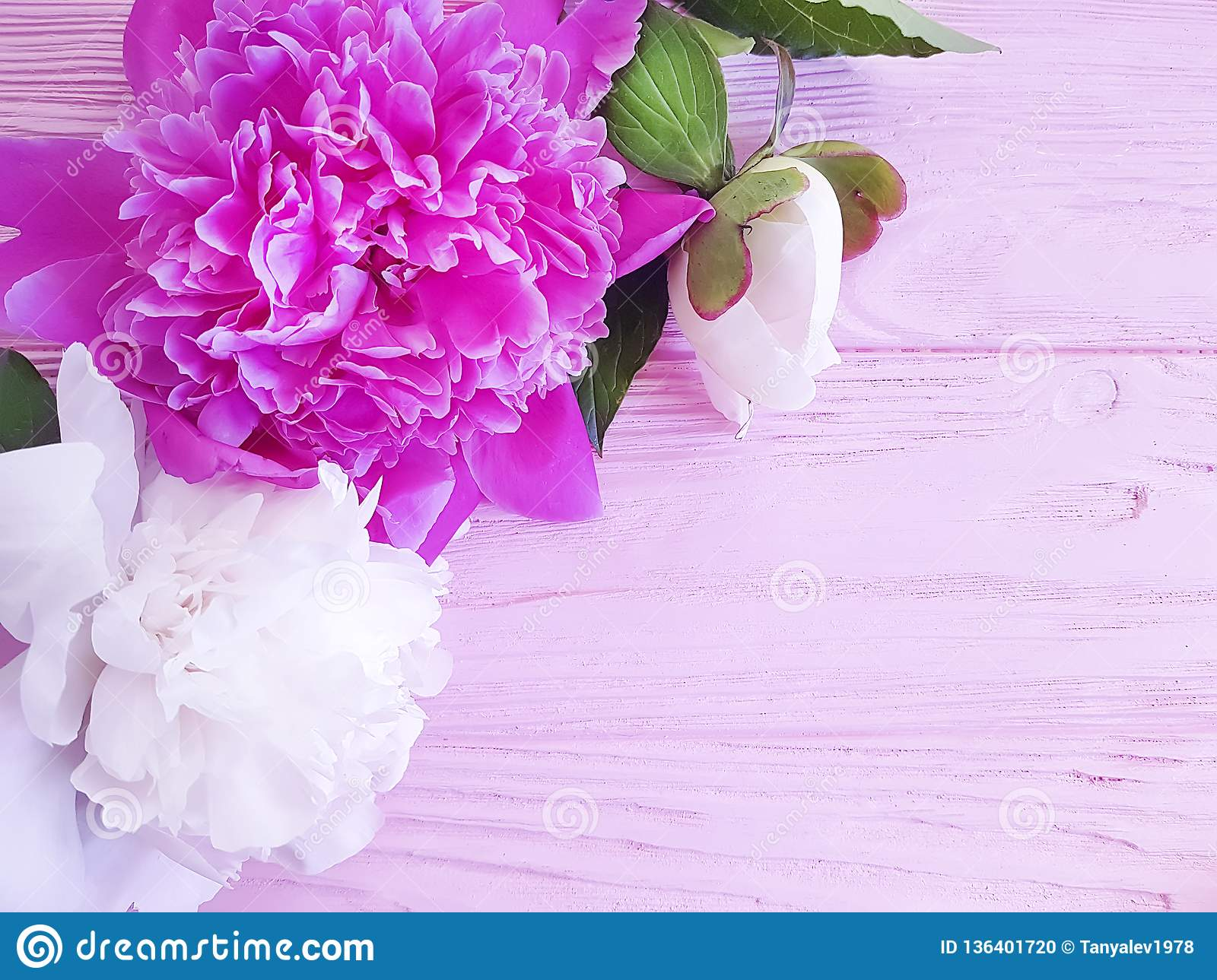 Beautiful flower summer peony birthday romantic on pink wooden background. frame
