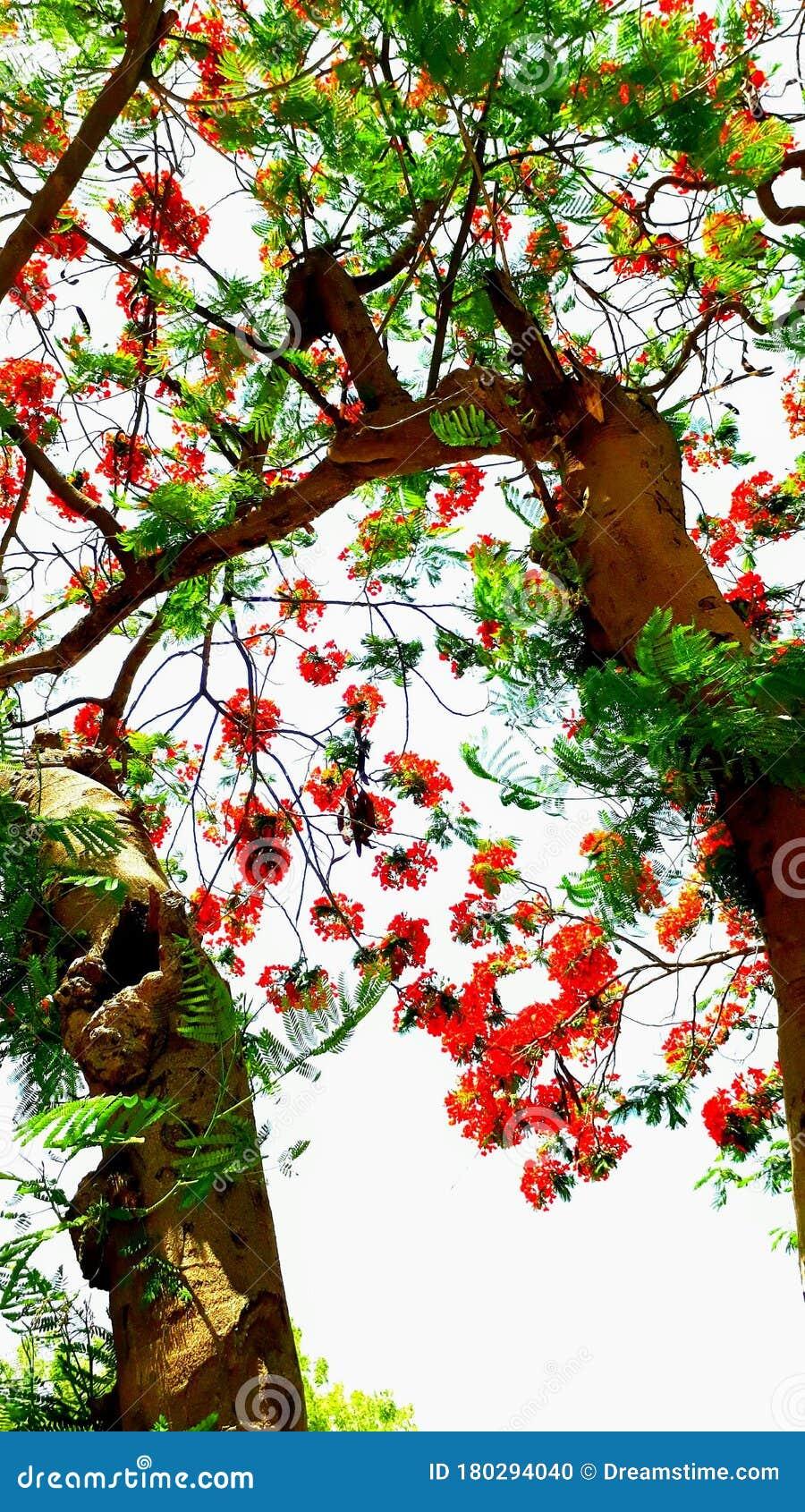 Beautiful Flower Tree Hd Wallpaper For Mobile Stock Photo Image Of Beautifulflowerhdwallpaper Beautifulflowerimages 180294040