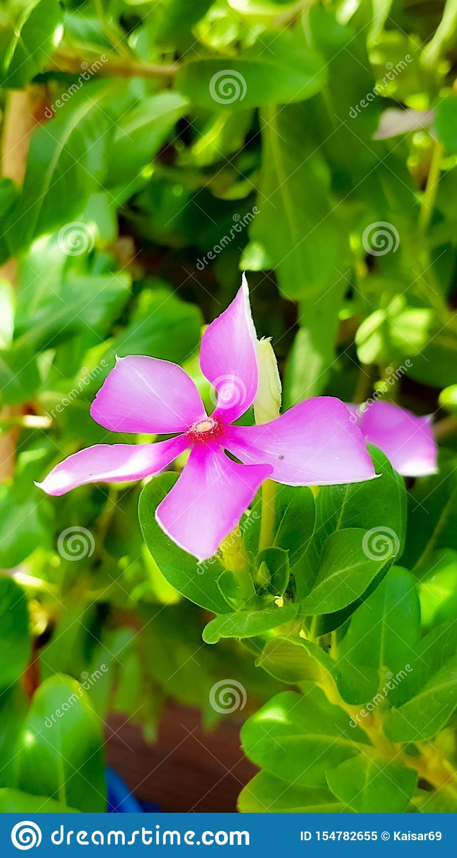 A Beautiful Flower Wallpaper For Mobile Stock Image Image