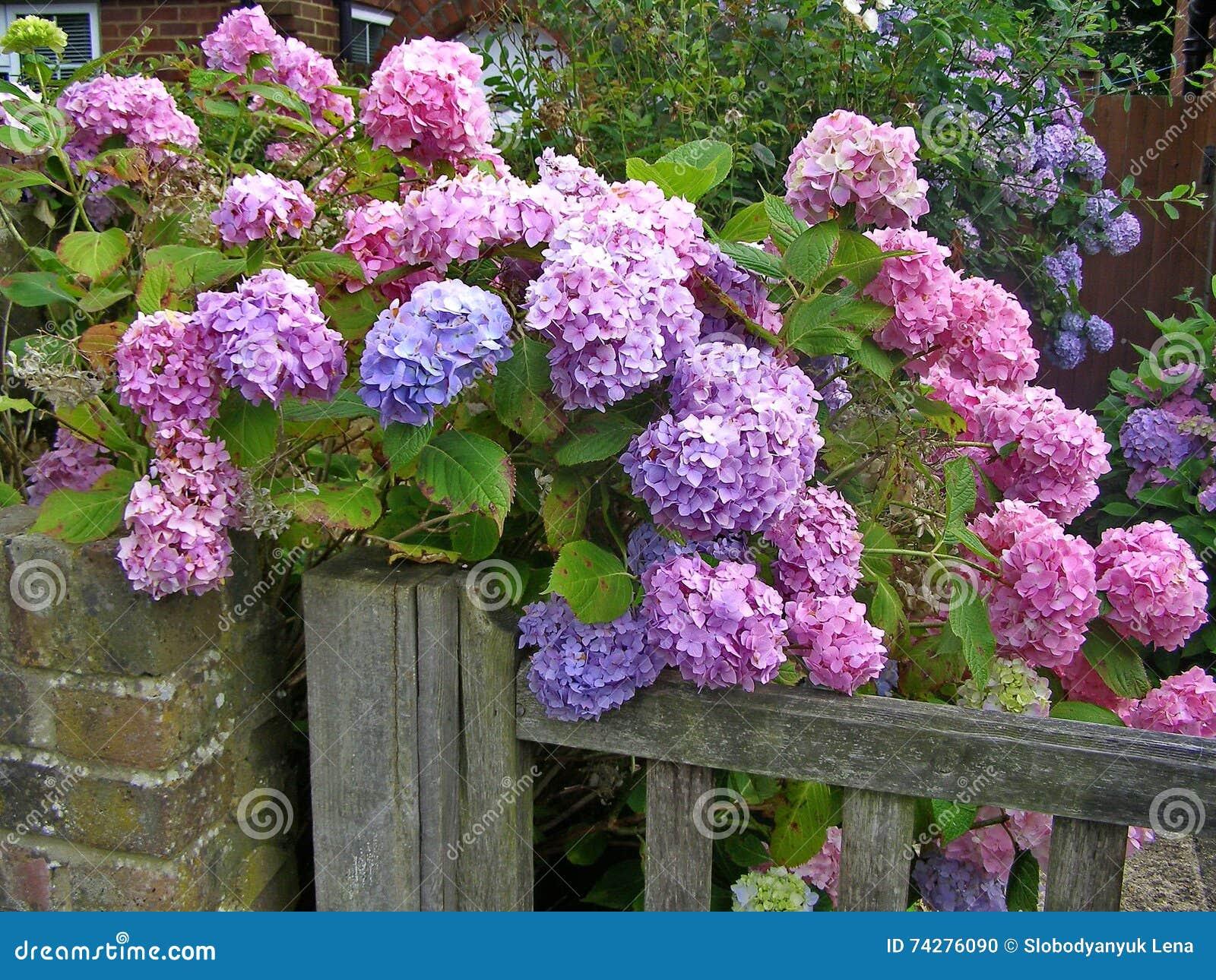 Beautiful Flowering Bush Stock Photo Image Of Park Delicate