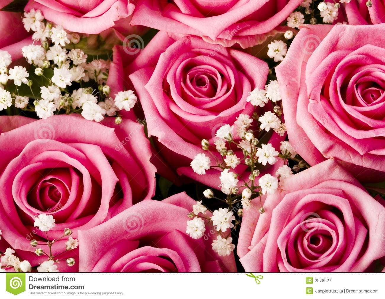 Beautiful flowers stock image image of emotion birthday 2978927 beautiful flowers izmirmasajfo