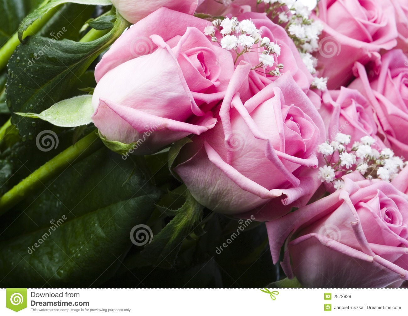 Beautiful flowers stock image image of nature love blossom 2978929 royalty free stock photo izmirmasajfo