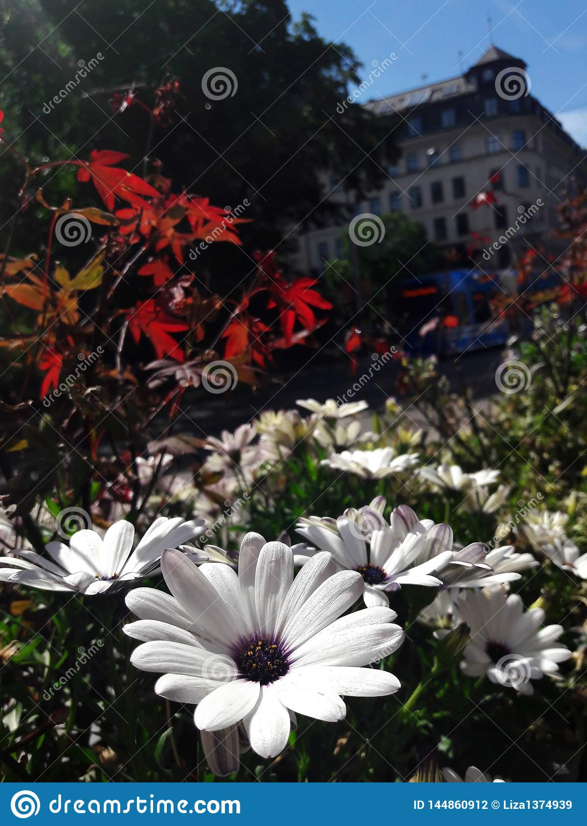 Beautiful flowers against the background of the European city. Stockholm, Sweden