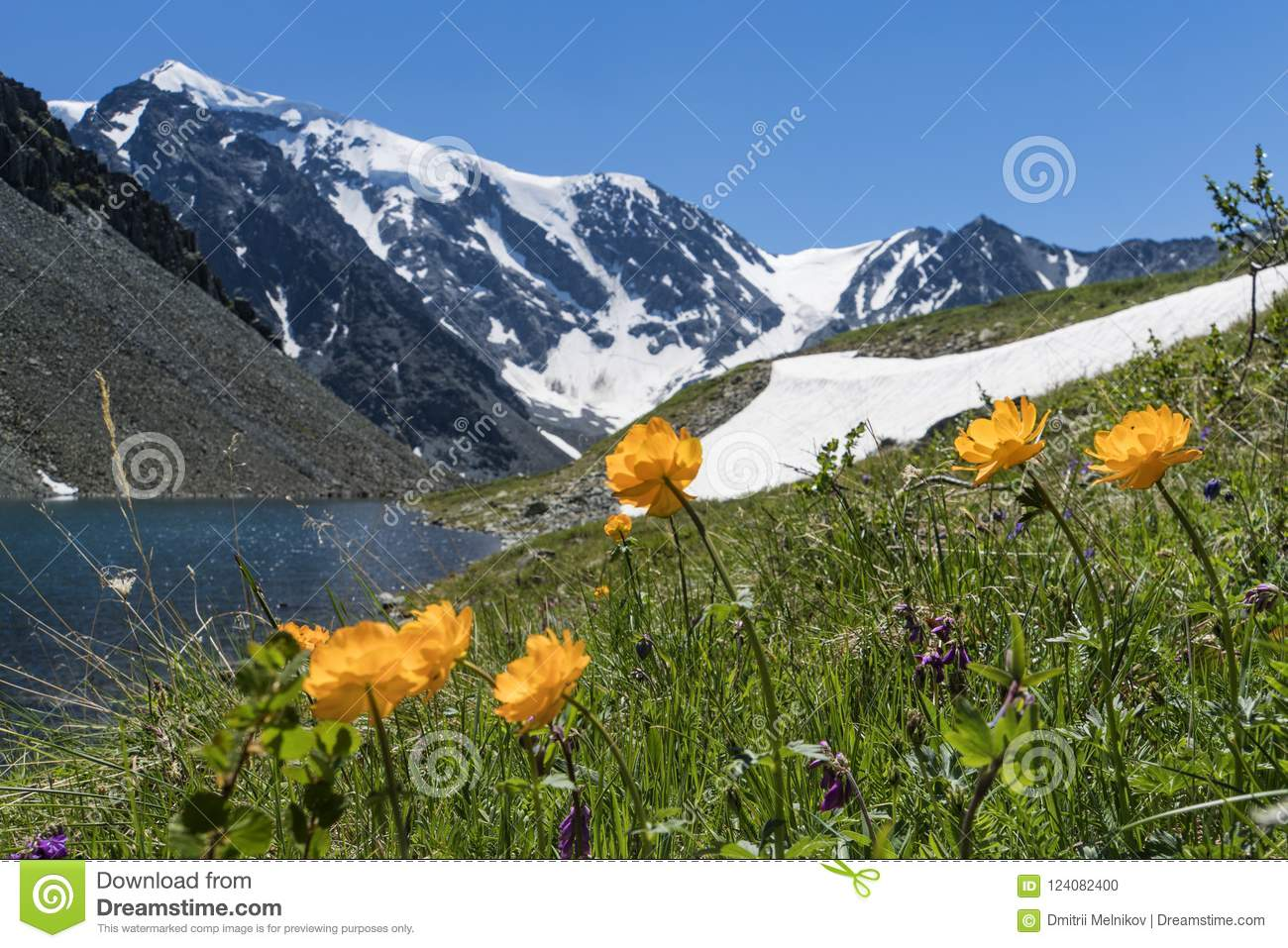 Landscape lake mountain flower picturesque snowy picturesboss beautiful flowers background mountain lake snowy peaks high mountains altai wildlife siberia russ orange yellow image izmirmasajfo