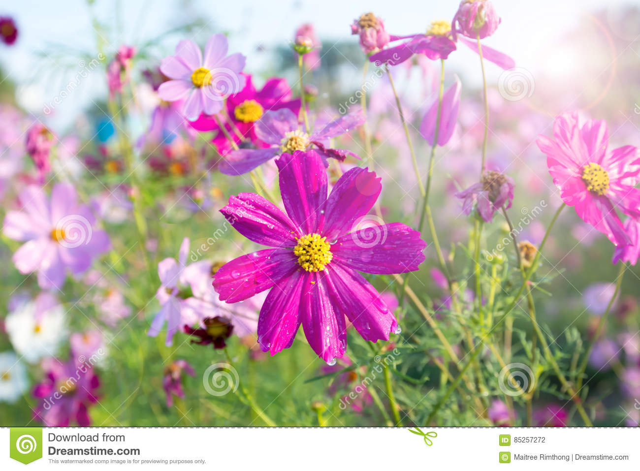 Beautiful flowers blooming in the field stock photo image of sunny beautiful flowers blooming in the field izmirmasajfo