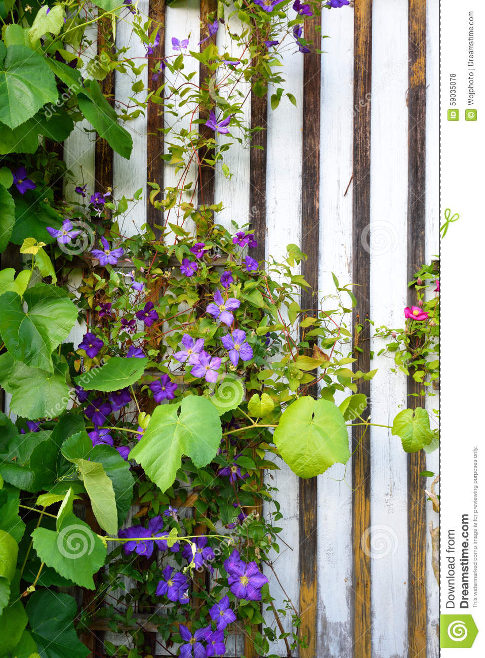 Beautiful flowers blooming and growing stock photo image of beautiful flowers blooming and growing izmirmasajfo Images
