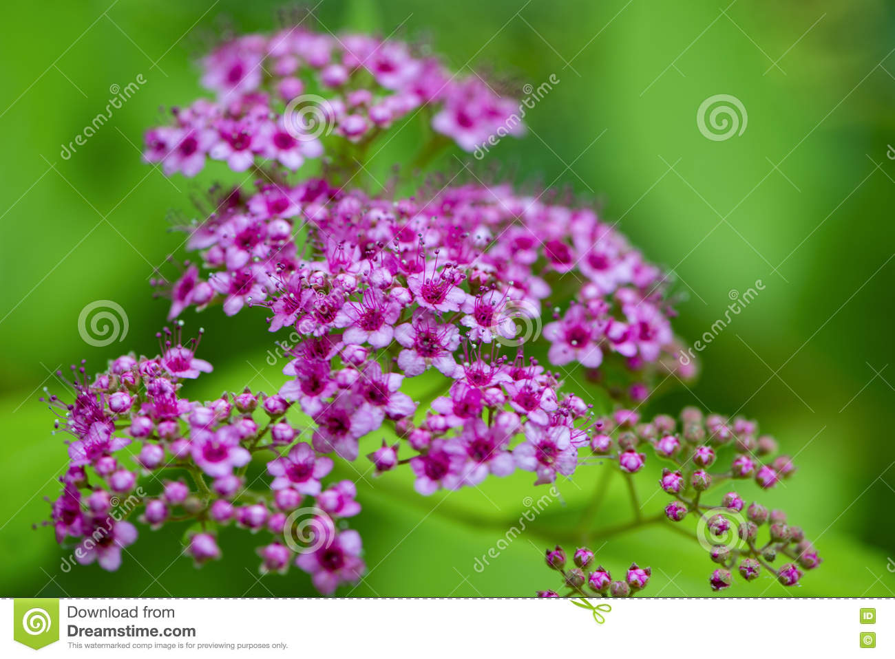 Beautiful Flowers For Cards And Greetings Stock Image Image Of