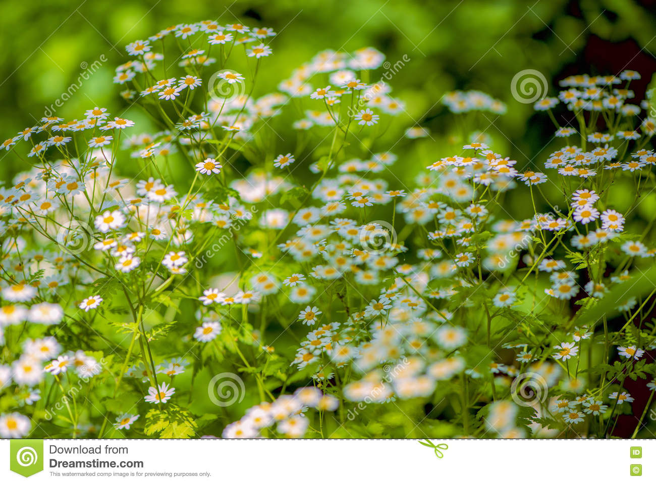 Beautiful flowers for cards and greetings stock photo image of royalty free stock photo izmirmasajfo Choice Image