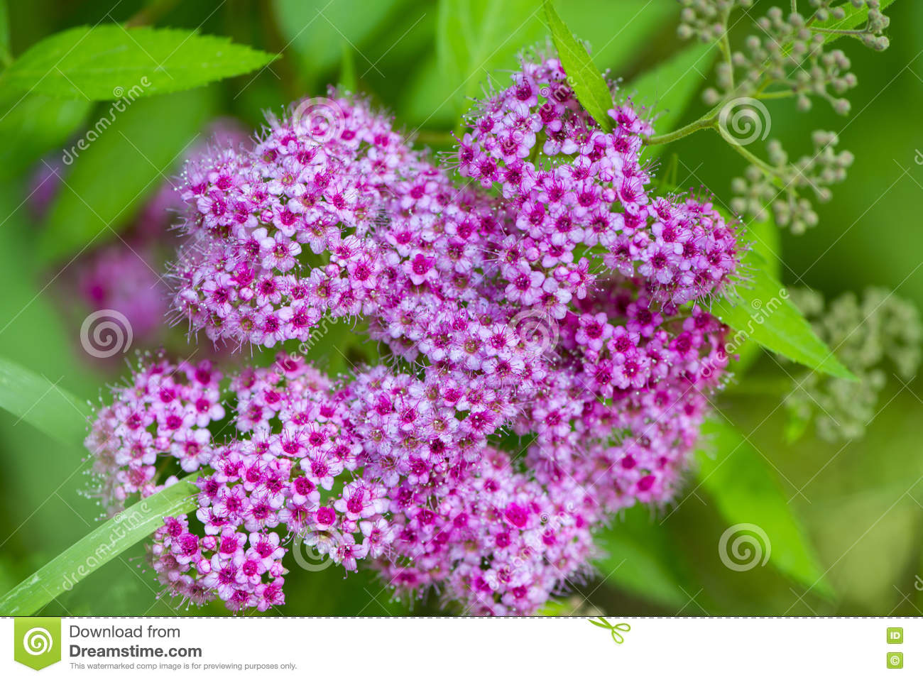 Beautiful flowers for cards and greetings stock image image of royalty free stock photo izmirmasajfo