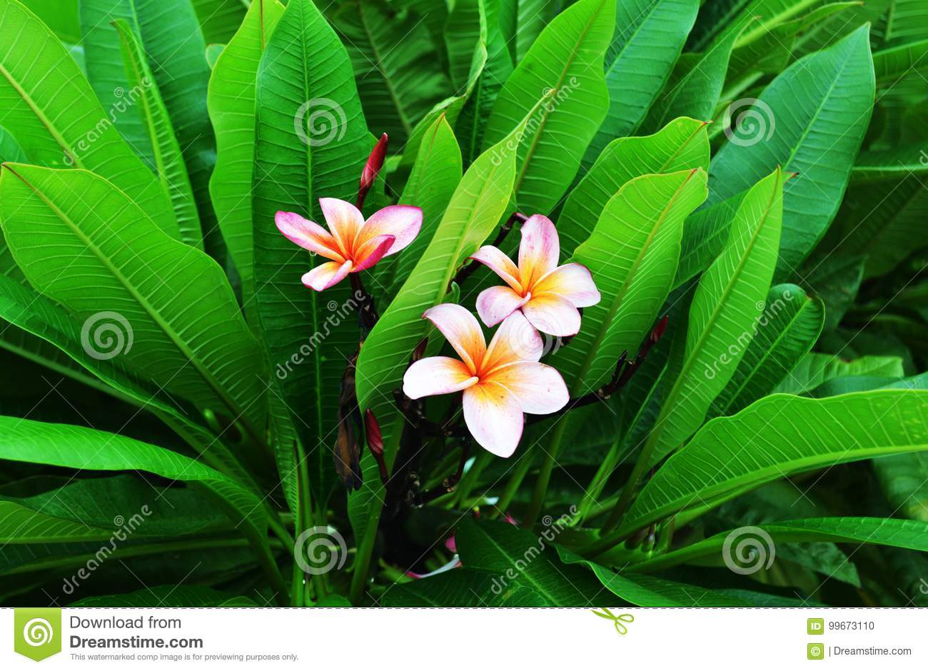 Beautiful Flowers In Chandigarh India Stock Photo Image Of India