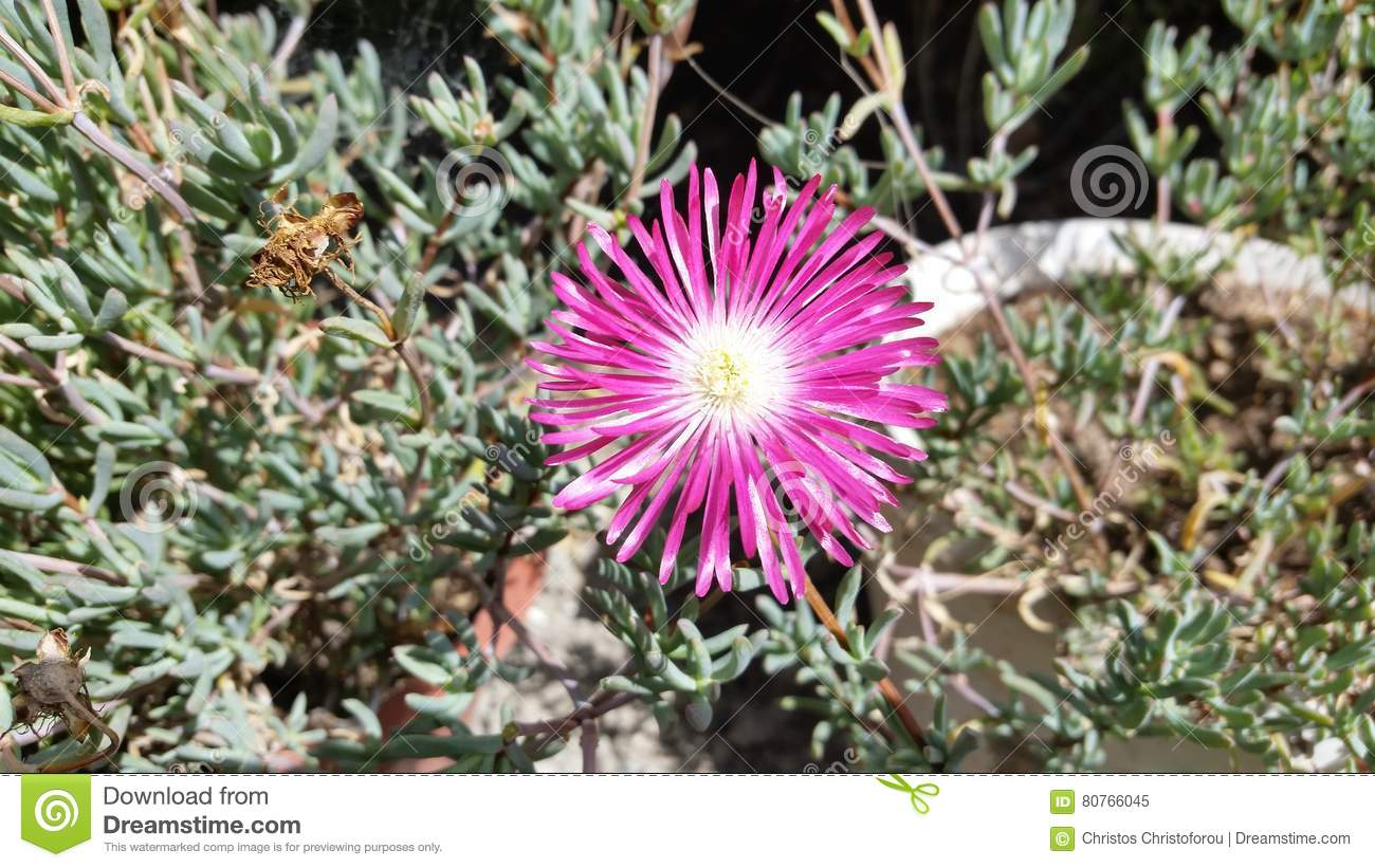 The Beautiful Flowers In Cyprus Stock Image Image Of Green Fresh