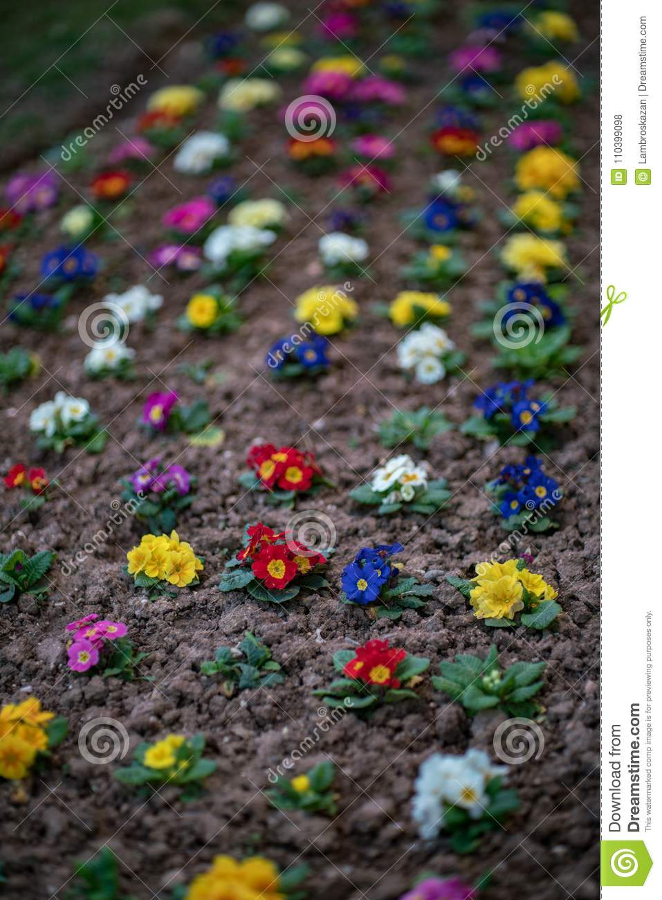 Beautiful Flowers in Different Colors, small garden in the city
