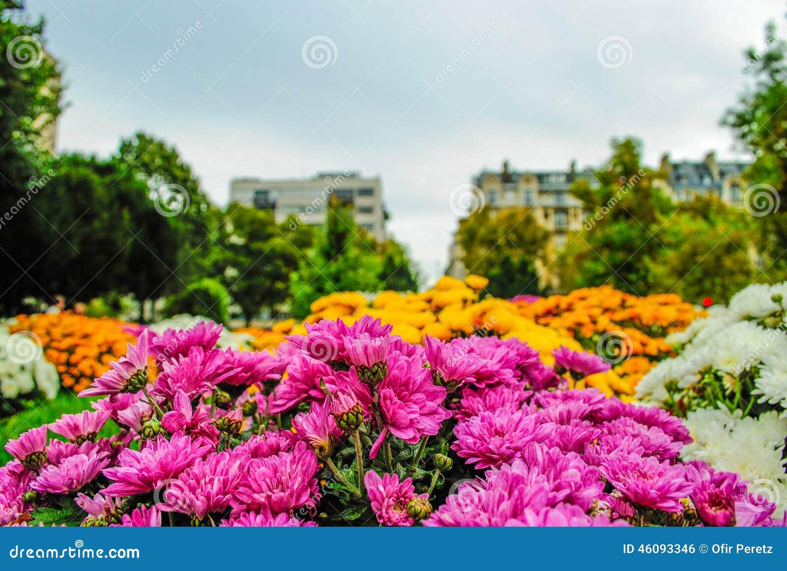 Beautiful Flowers Flowers At A Parisian Garden Stock Photo ...