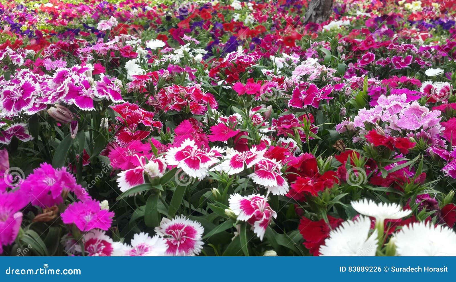 beautiful flowers in the garden under the winter sun stock photo