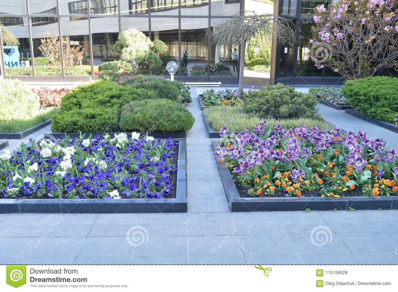 Beautiful Flowers Grow On Flower Beds Stock Image Image Of Beauty