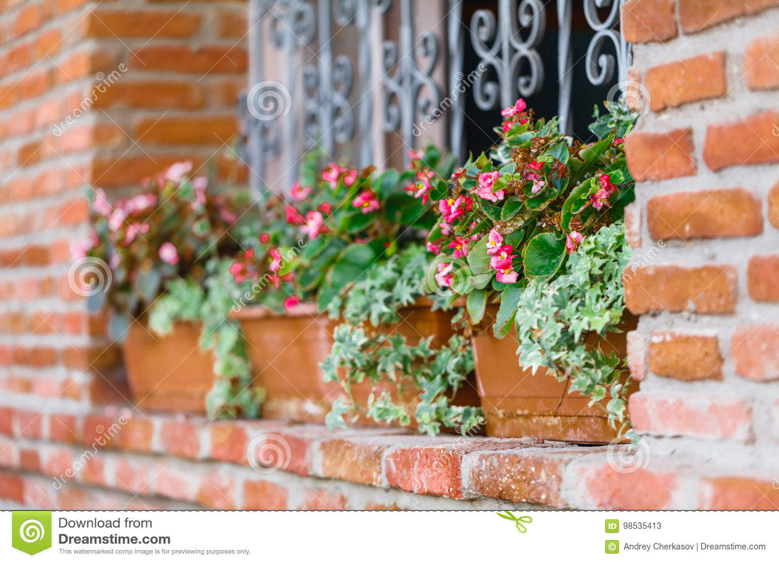 Beautiful Flowers Growing In A Window Garden Stock Image Image Of
