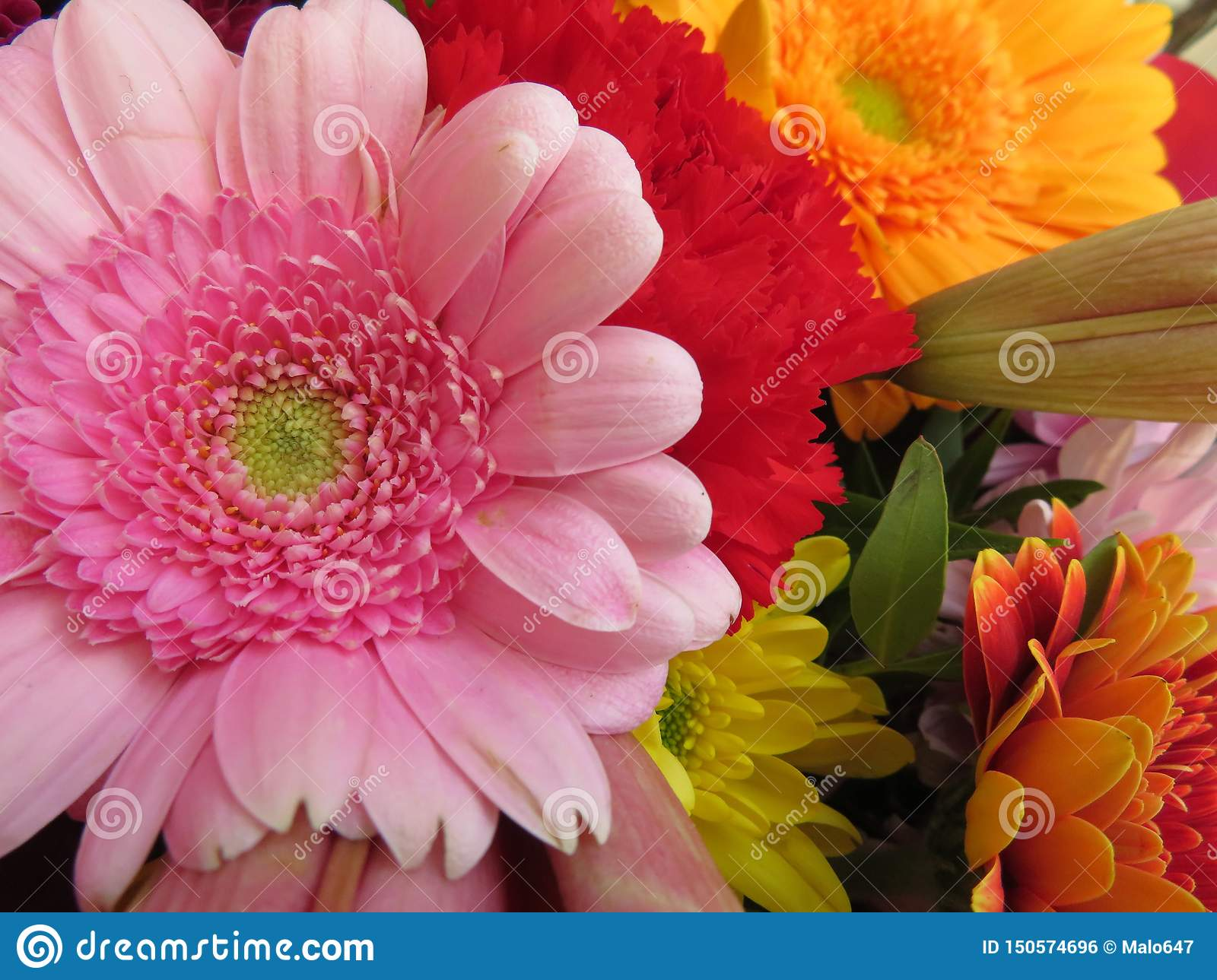 Beautiful flowers of intense colors and of great beauty