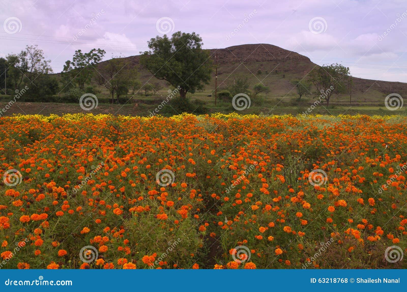 Beautiful flowers and mountain stock photo image of nature beautiful flowers and mountain izmirmasajfo