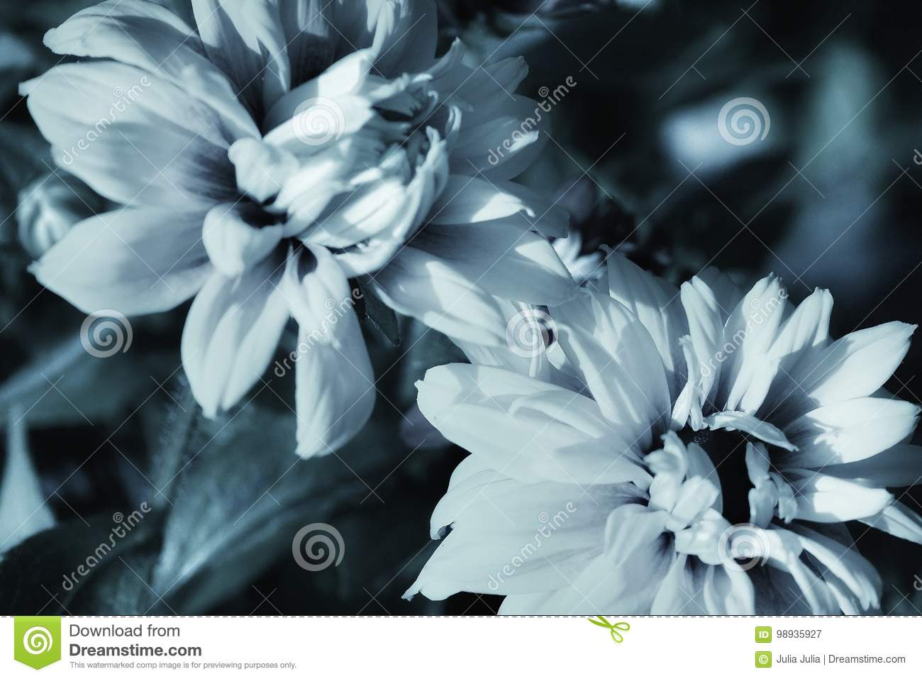 Beautiful flowers no colors black and white photography nature stock beautiful flowers no colors black and white photography nature izmirmasajfo