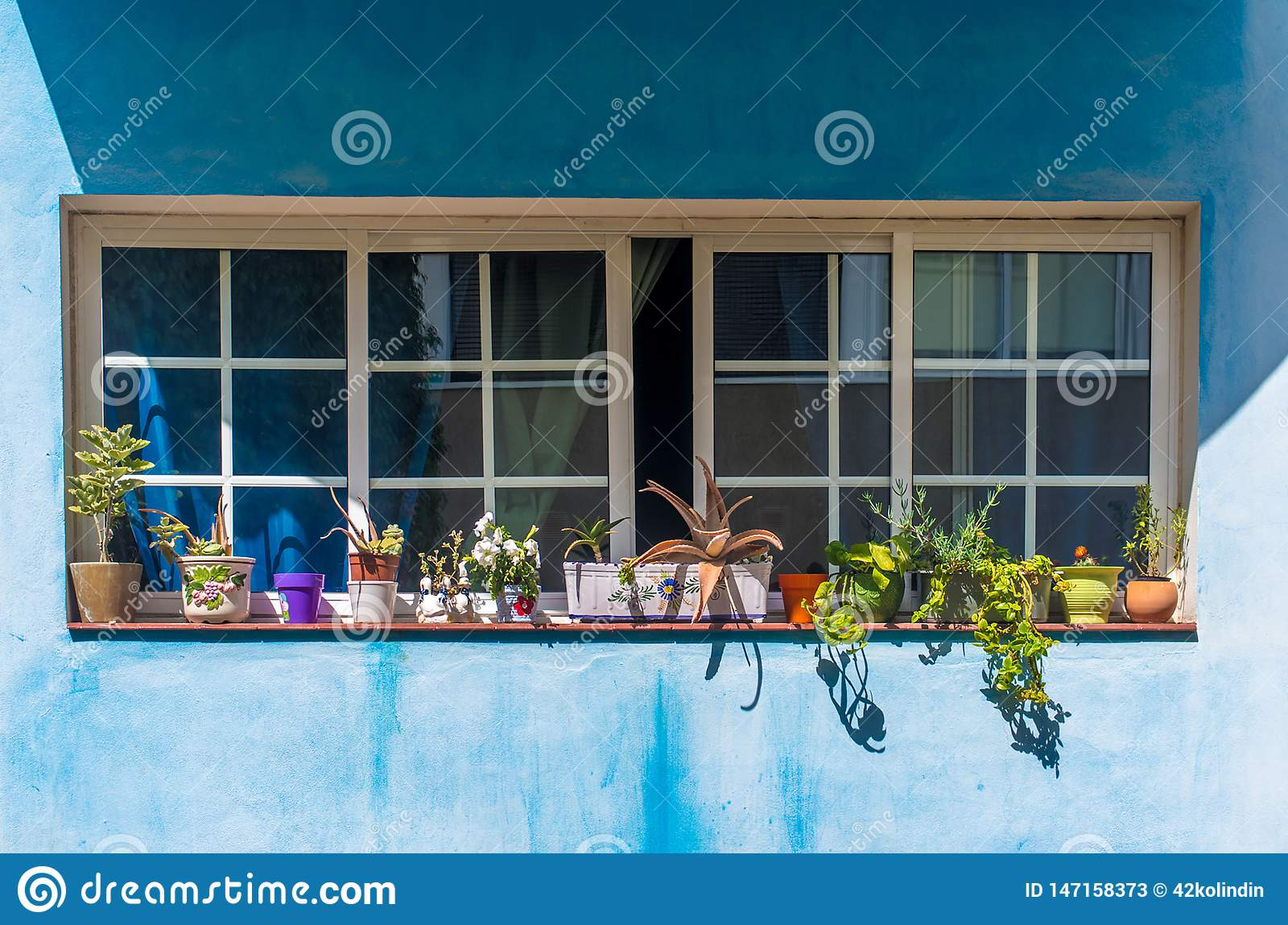 Beautiful flowers in the open close windows on blue canarian wall