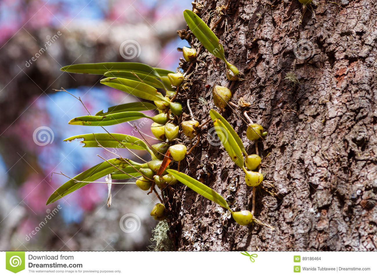 Beautiful flowers orchids in nature stock photo image of flora download beautiful flowers orchids in nature stock photo image of flora bright izmirmasajfo