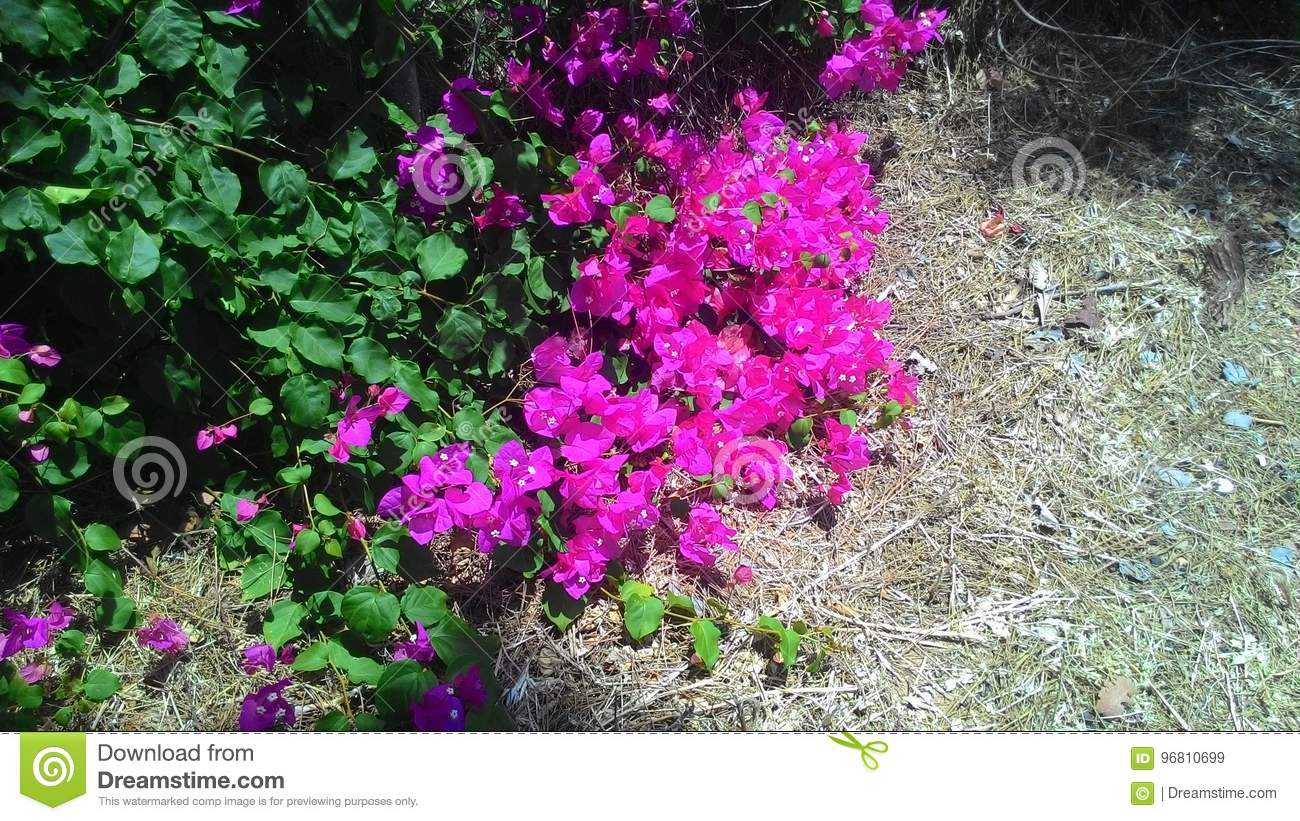 Beautiful Flowers And Plants Of The Island Of Cyprus Stock Image