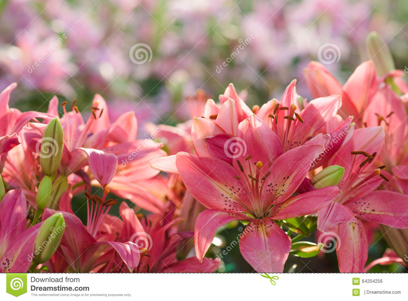 Beautiful flowers stock photo image 64204256 for Flowers that mean life