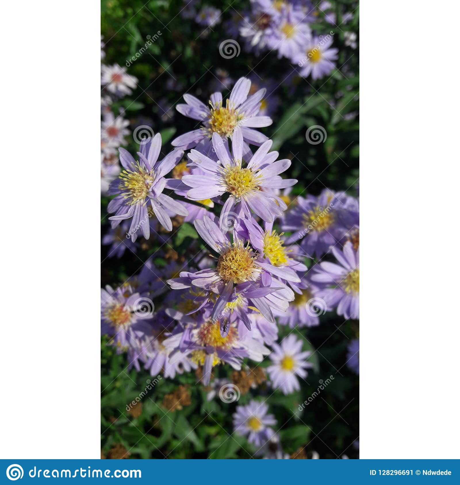Stunning flowers in the nature in purple color lot of flowers