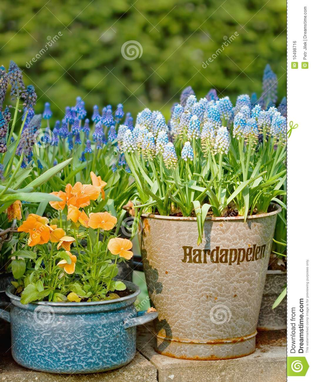 Pictures of Beautiful Flower Pots http://www.dreamstime.com/royalty-free-stock-image-beautiful-flowers-sheet-covering-pots-image10498716