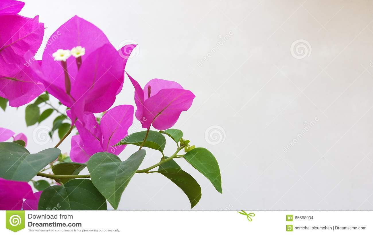 Beautiful Flowers Shine In The World Of Dreams Real Stock Photo