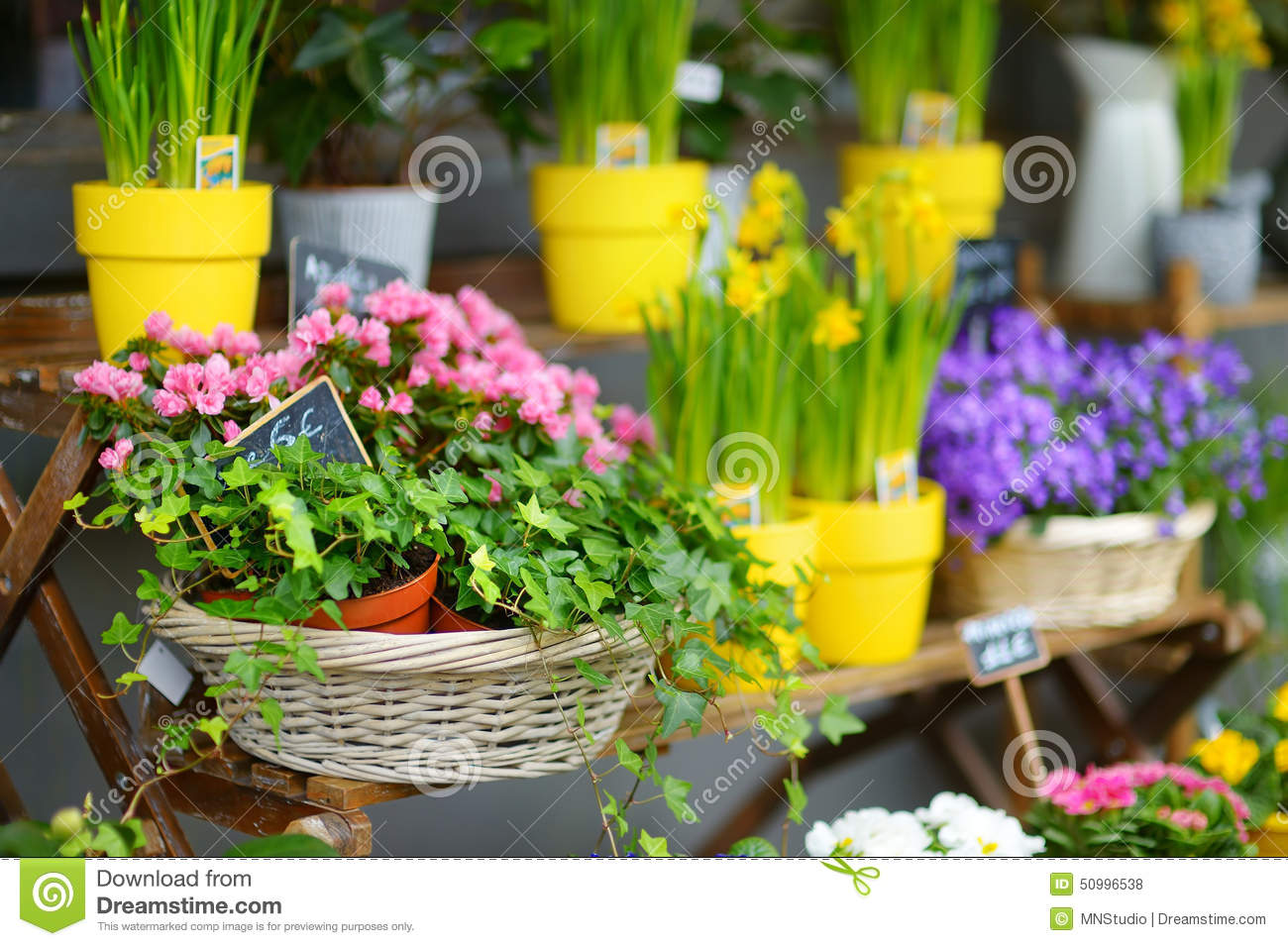 Beautiful flowers sold on outdoor flower shop stock photo image of download beautiful flowers sold on outdoor flower shop stock photo image of fresh narciss izmirmasajfo