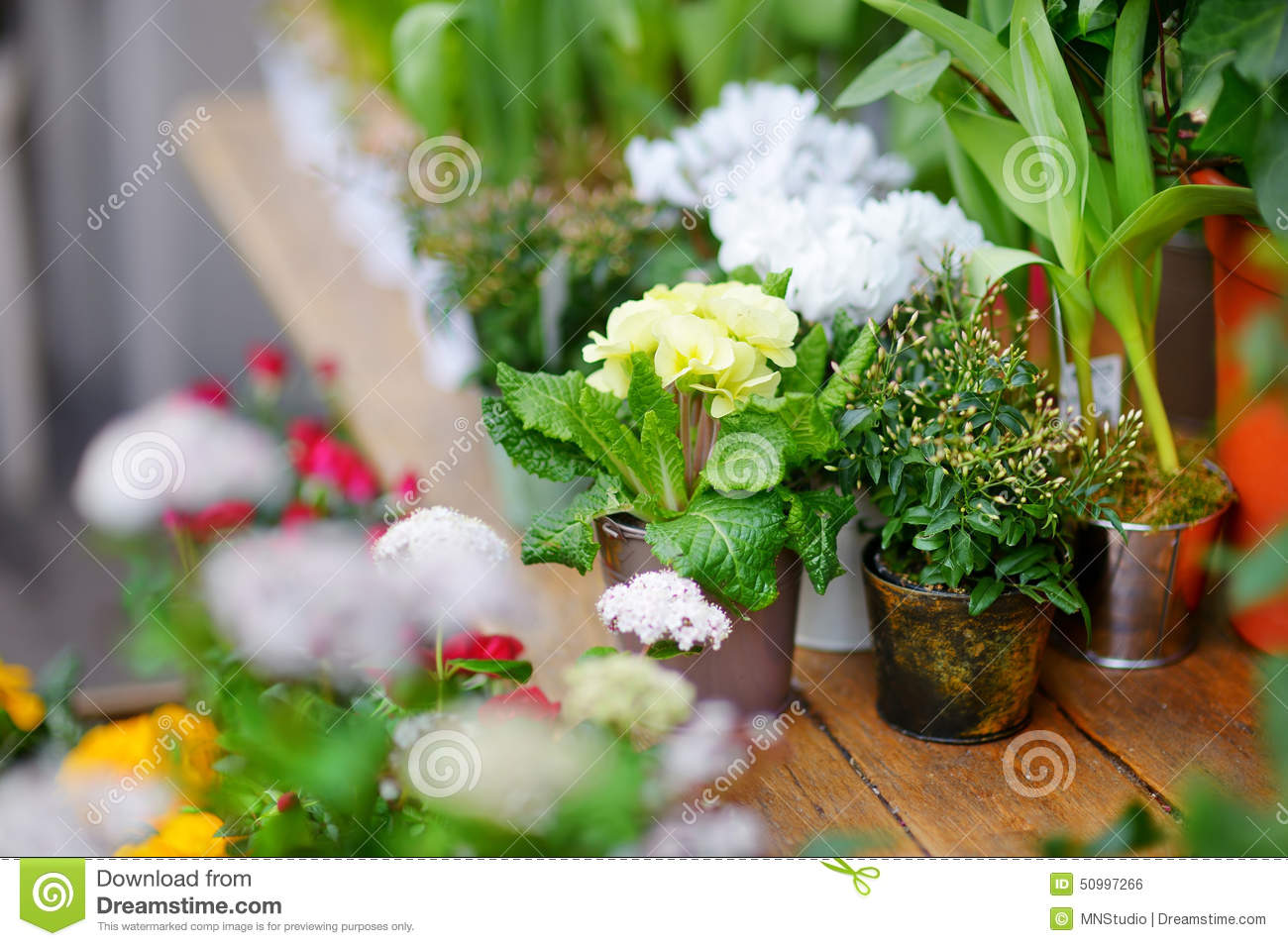 Beautiful flowers sold on outdoor flower shop stock photo image of download beautiful flowers sold on outdoor flower shop stock photo image of outdoors floral izmirmasajfo