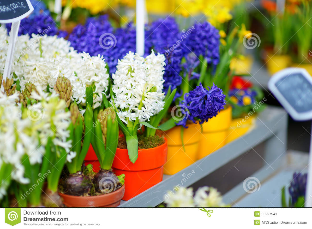 Beautiful Flowers Sold On Outdoor Flower Shop Stock Image Image Of