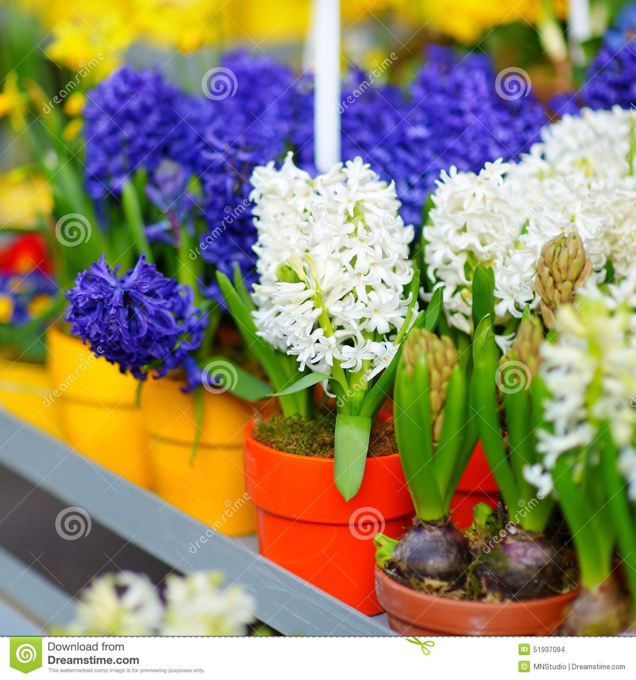 Beautiful Flowers Sold On Outdoor Flower Shop Stock Photo Image Of