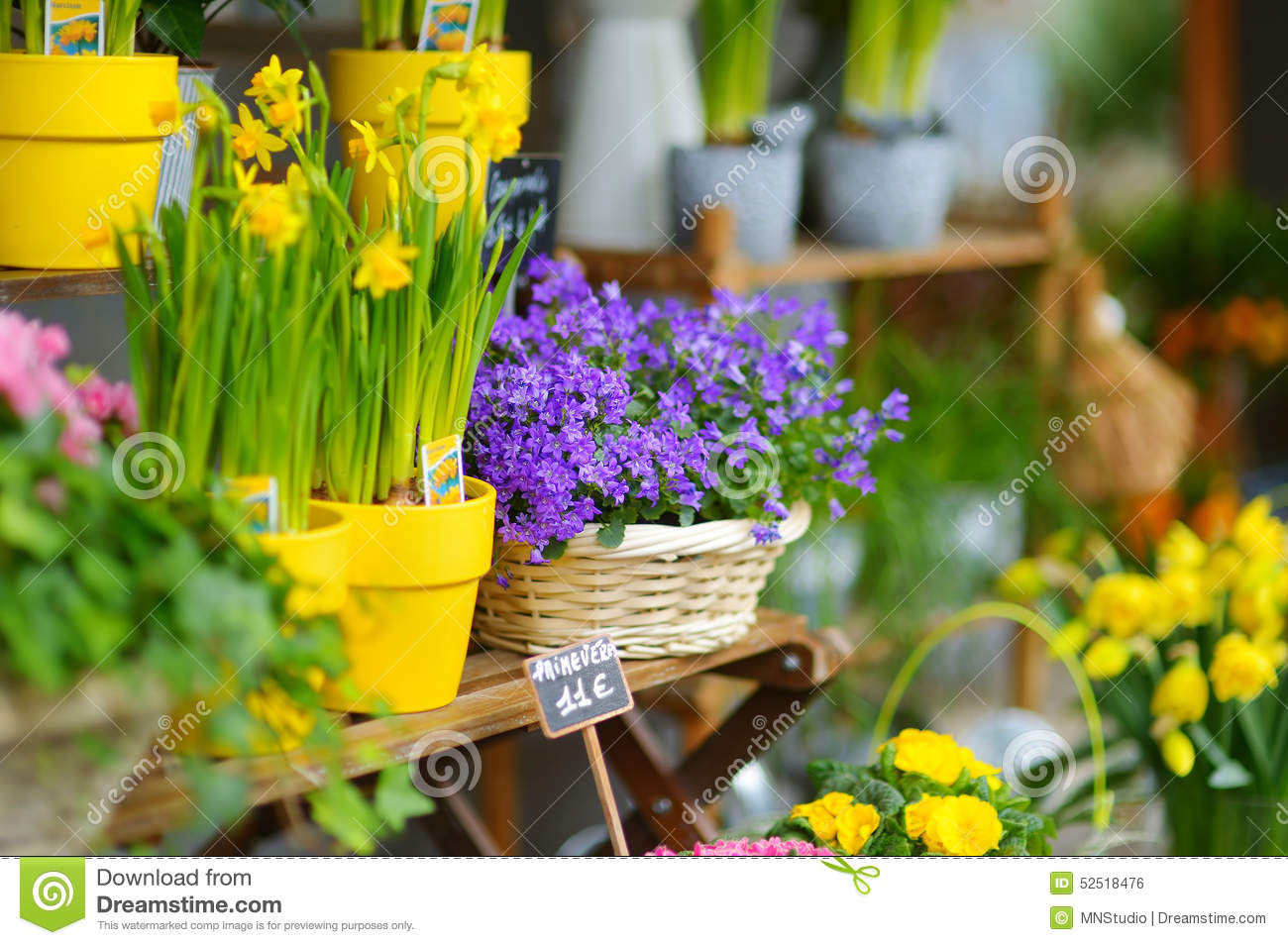 Beautiful flowers sold on outdoor flower shop stock photo image of download beautiful flowers sold on outdoor flower shop stock photo image of narciss price izmirmasajfo