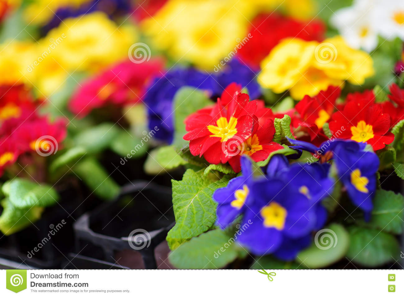 Beautiful flowers sold in outdoor flower shop in small town in royalty free stock photo izmirmasajfo
