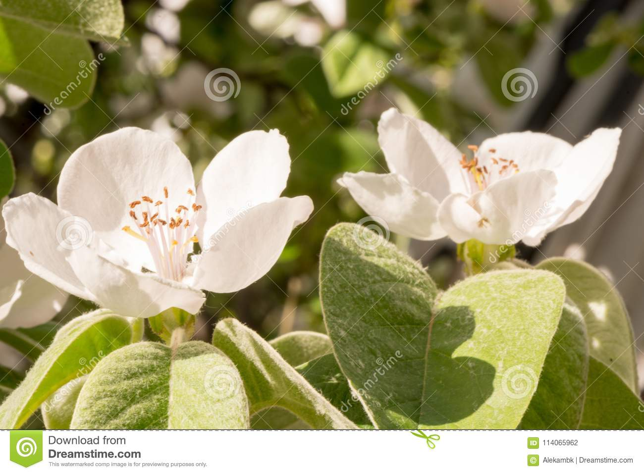 A beautiful flowers in the spring in greece stock photo image of beautiful spring flower near the river green natural unusual in greece izmirmasajfo