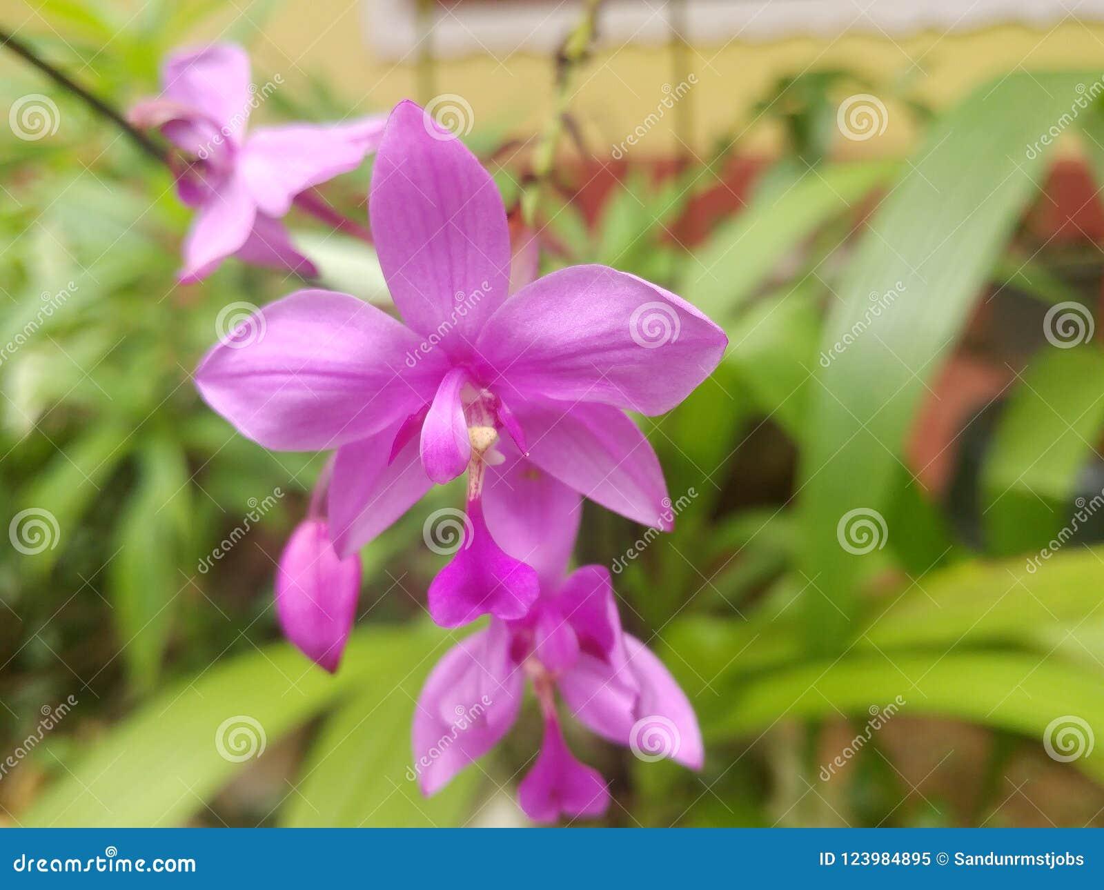 Beautiful Flowers In Sri Lanka Stock Image Image Of Designed