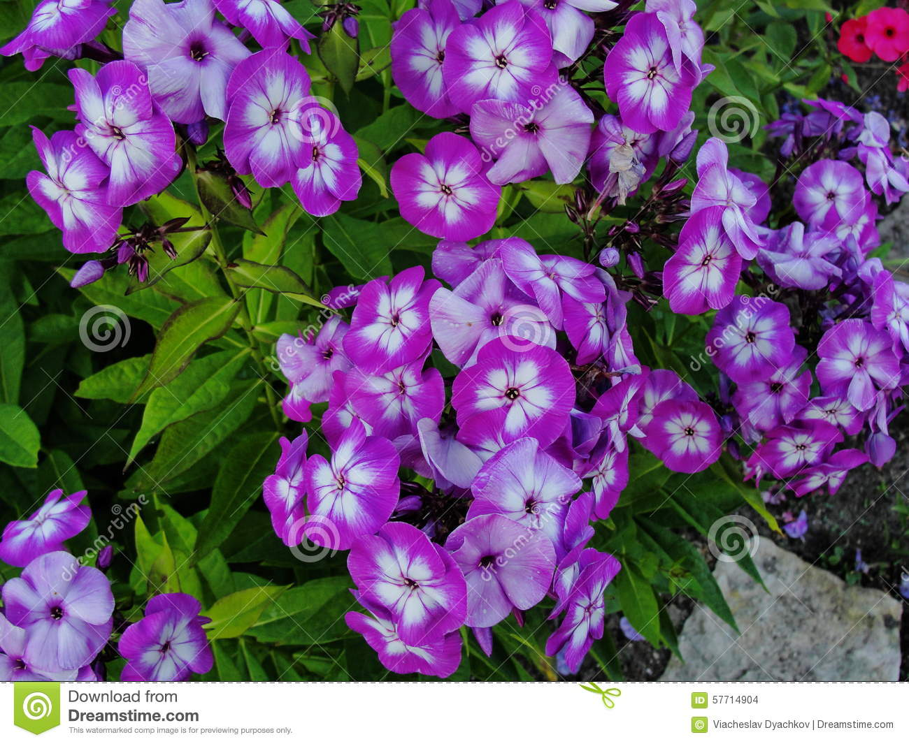 Perfect Purple Flower With White Center Images Wedding And Flowers