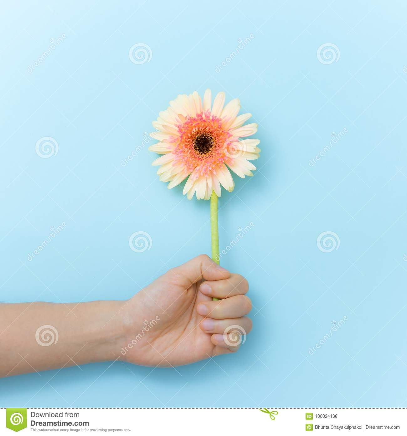 Beautiful Flowers To Gift In Hand Stock Photo Image Of Beauty