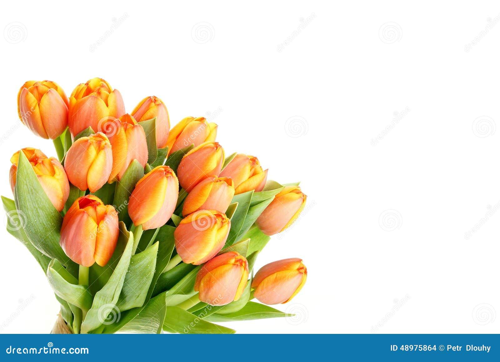 Beautiful Flowers Tulip Stock Photo Image Of Fragrance 48975864