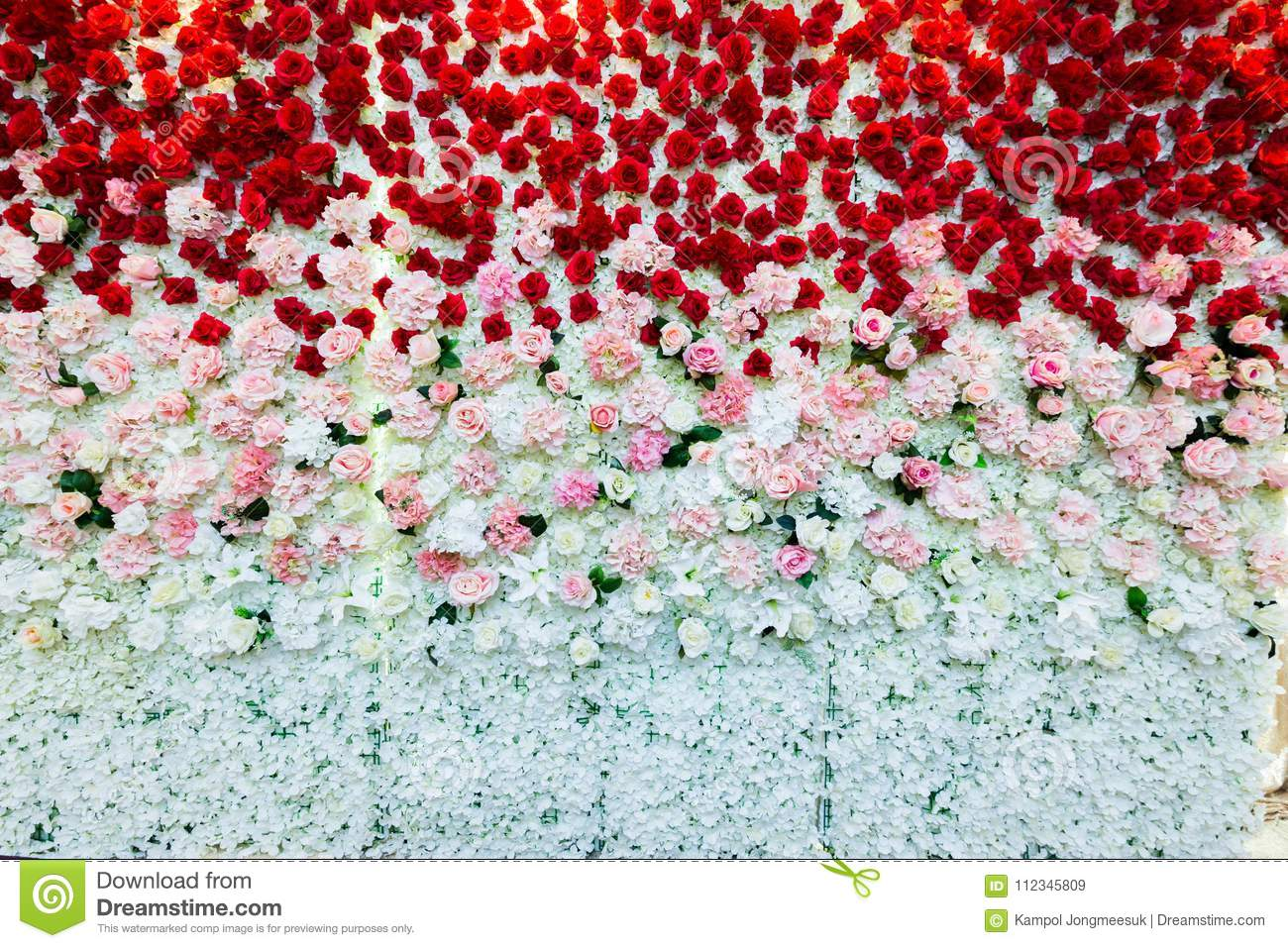A Beautiful Flowers Wall Background With Amazing Red Pink And White Roses Stock Image Image Of Beautiful Field 112345809