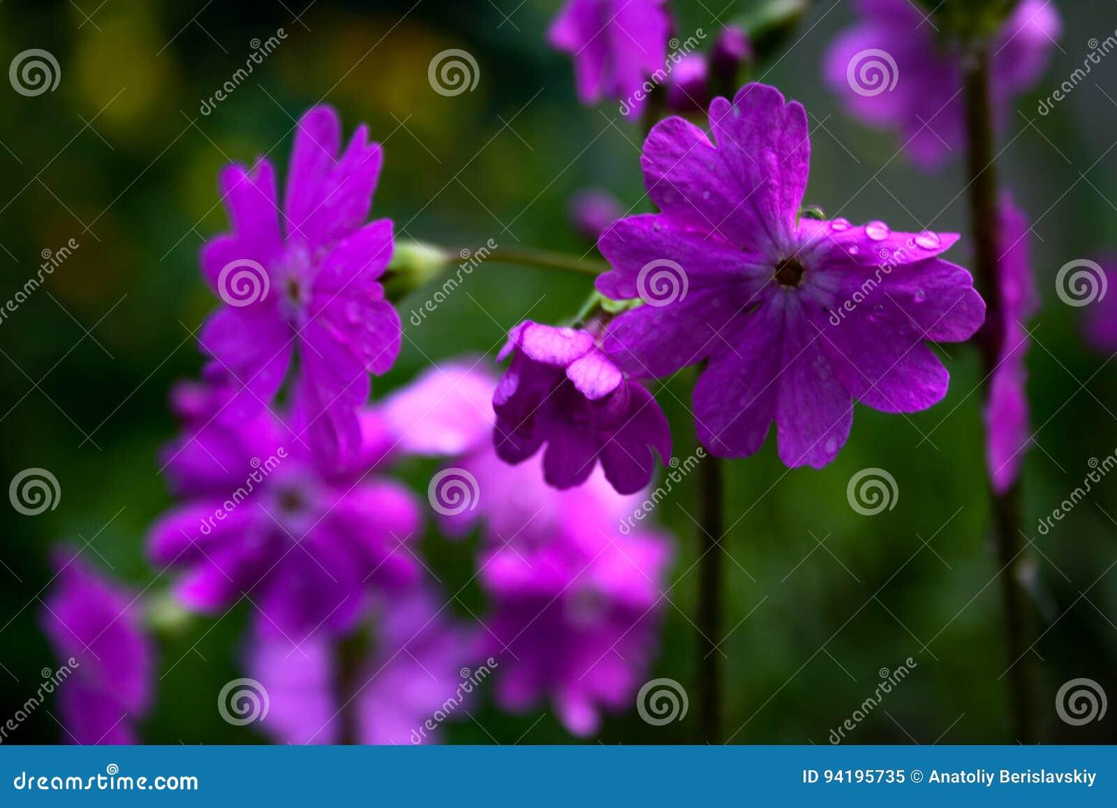 Beautiful flowers wallpaper background stock image image of beautiful flowers wallpaper background izmirmasajfo