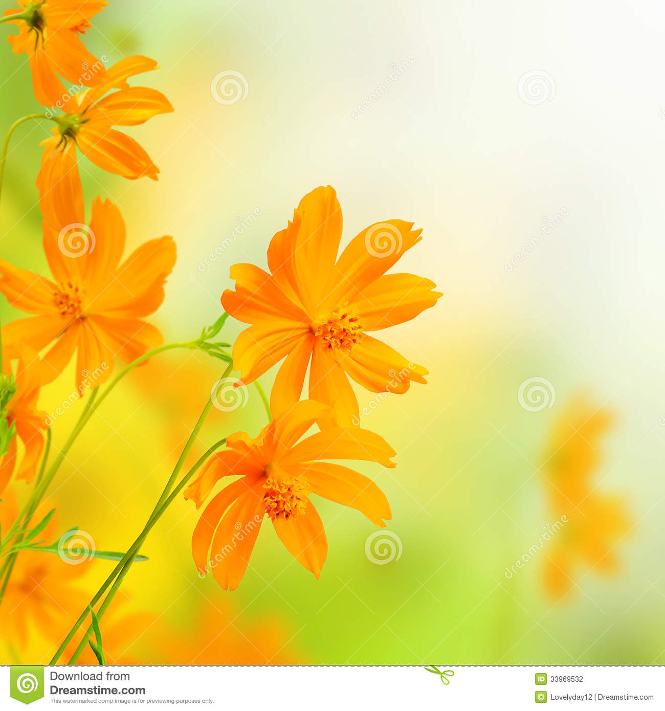 Beautiful flowers yellow border floral design stock photo image beautiful flowers yellow border floral design izmirmasajfo