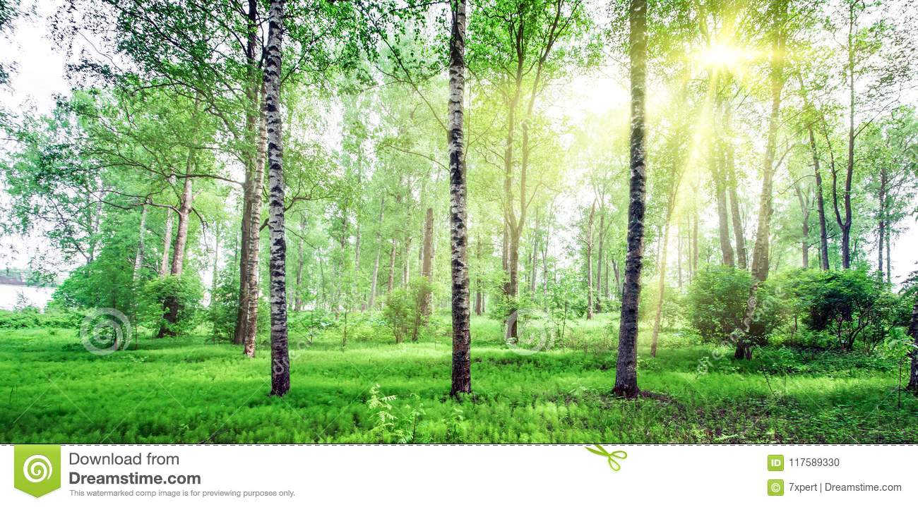 Beautiful Forest Background Stock Photo Image Of Summer Sunlight