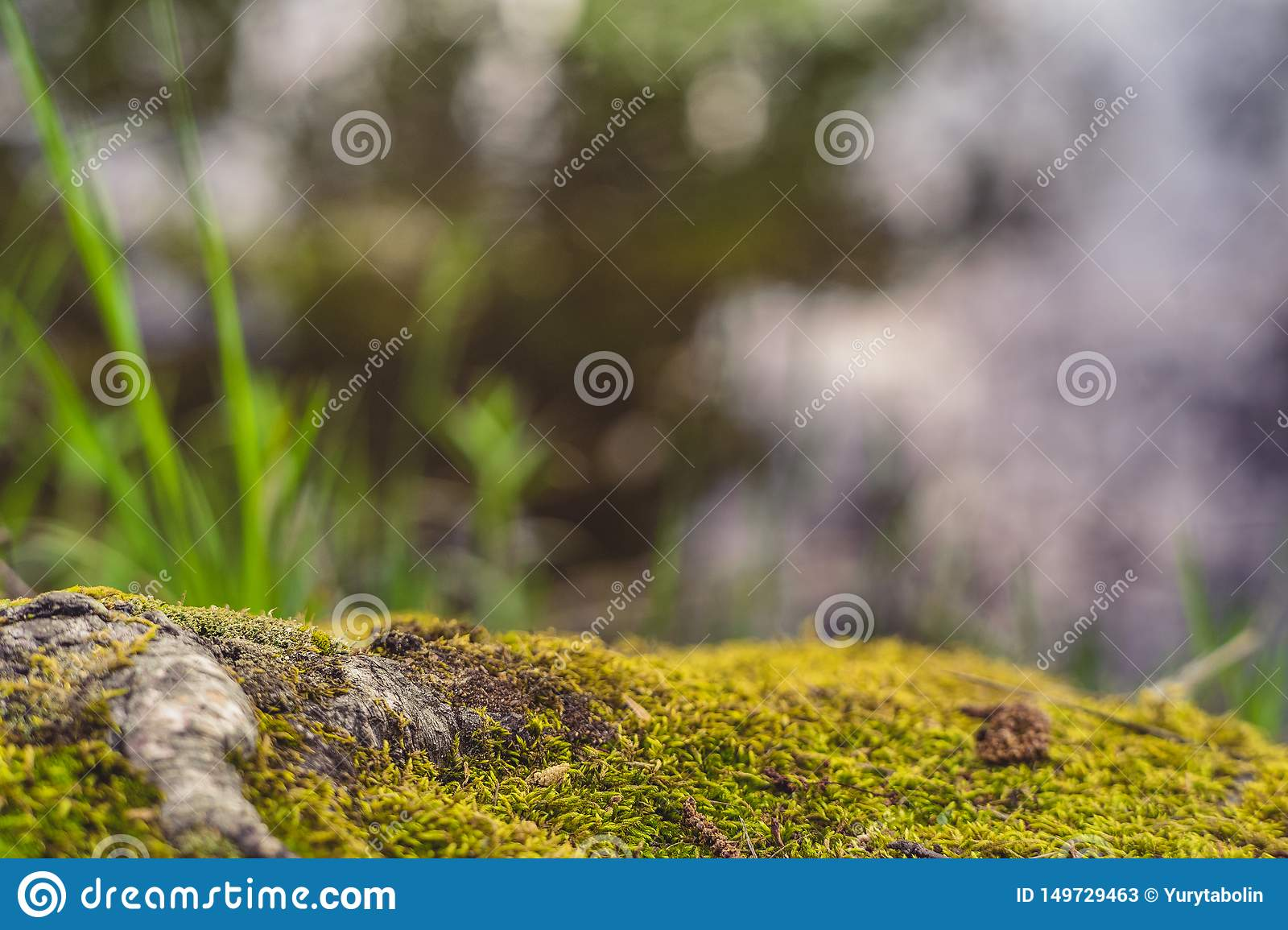 Beautiful forest background. Forest floor. Moss. Tree roots.