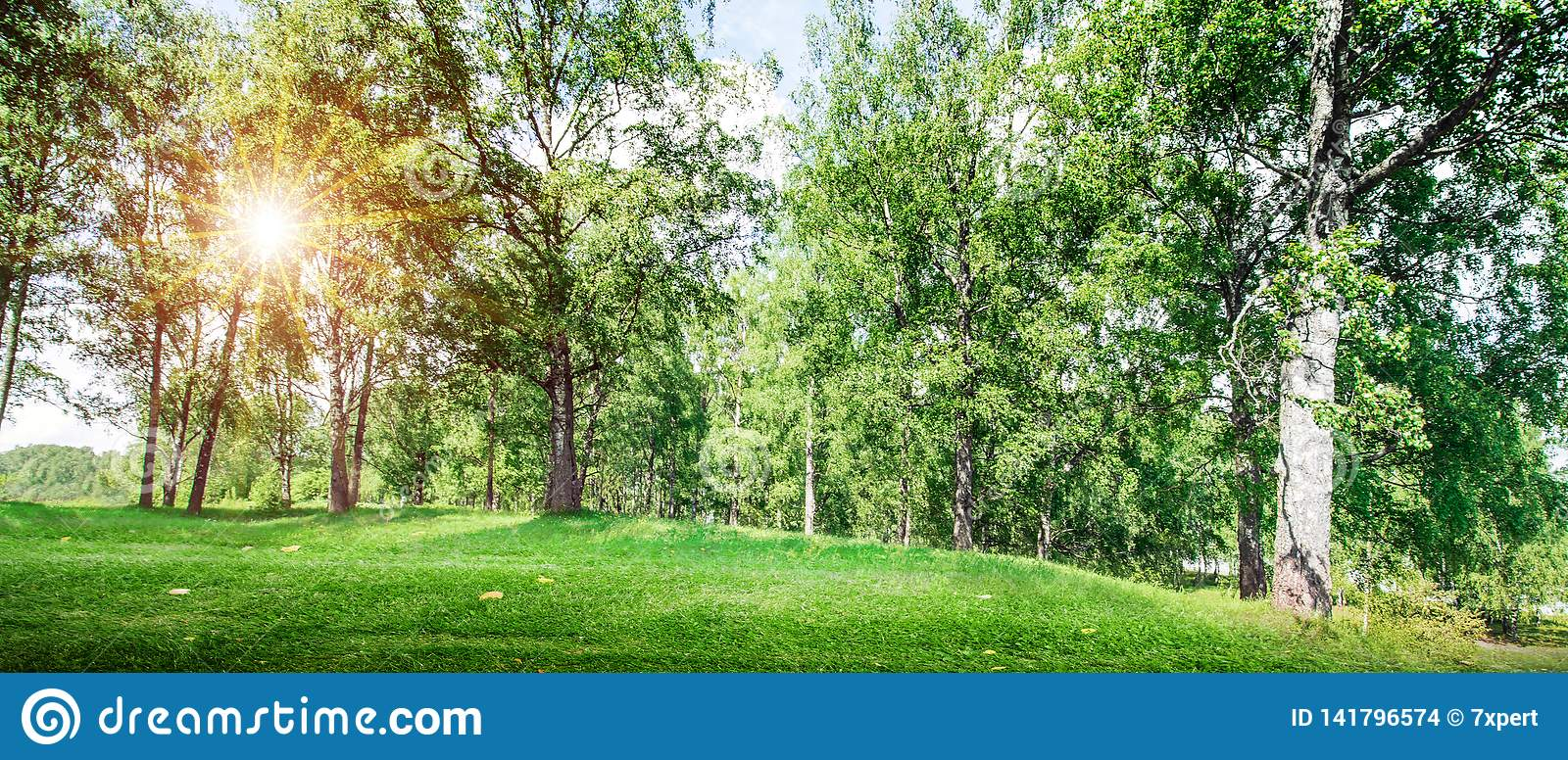 Beautiful Forest Background Stock Photo Image Of Trees Light